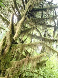 Moss grows from everywhere in the rainforest, covering the ground and trees.