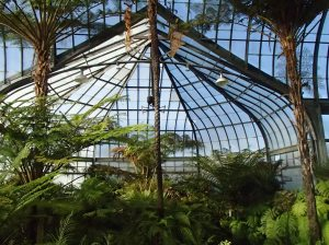 One of the five sections in the Belle Isle Conservatory, the fern room.