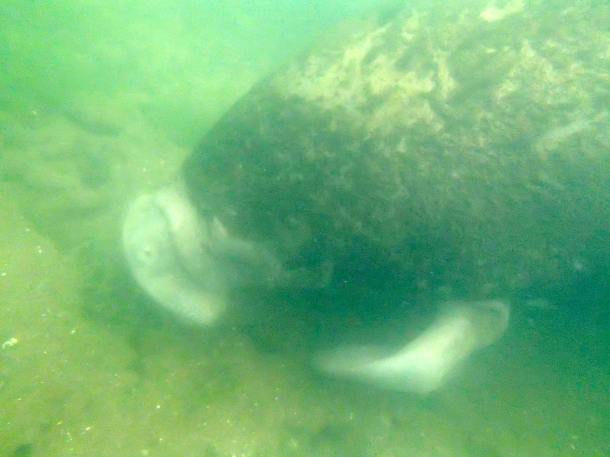 Swimming with Manatees!
