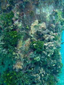 Pier supports covered in small corals and little fish in Esperanza