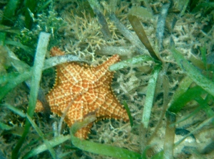 Mosquito pier is known for it's stunning starfish